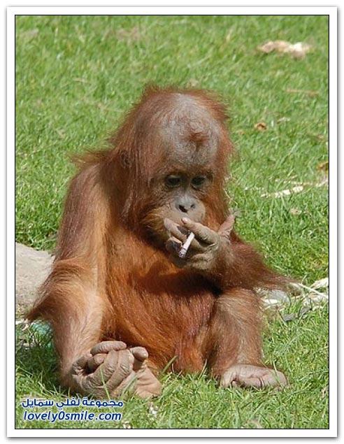 صور: حتى القرود خربوها