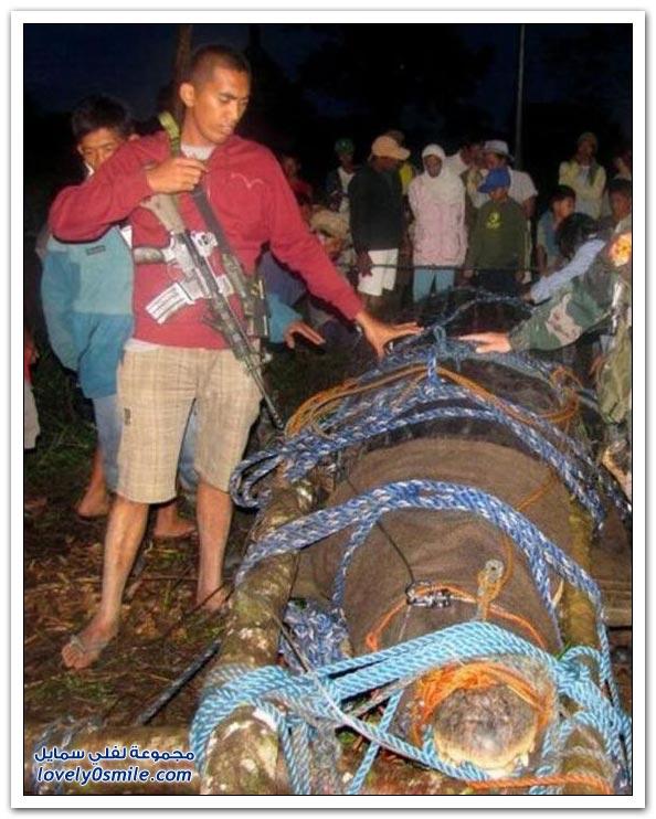 اكتشاف تمساح ضخم في الفلبين