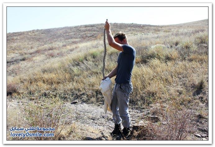 صيد الثعابين