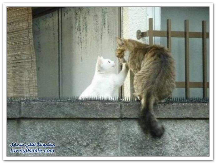 الحب يعمل عمايل حتى مع القطط
