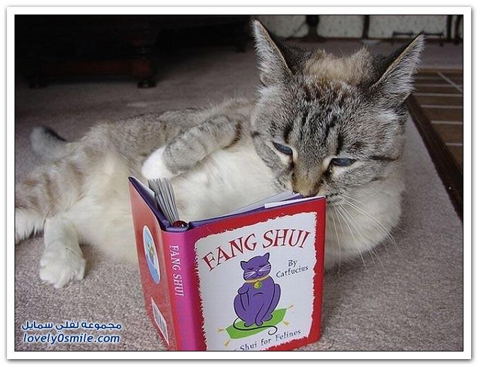 القطط والكتب