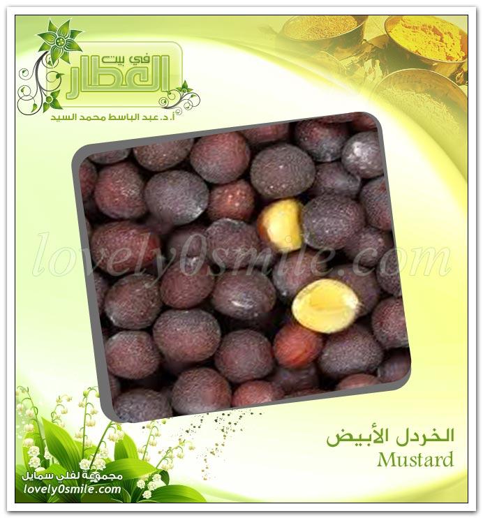 الخردل الأبيض Mustard SpiceDealer-007.jpg