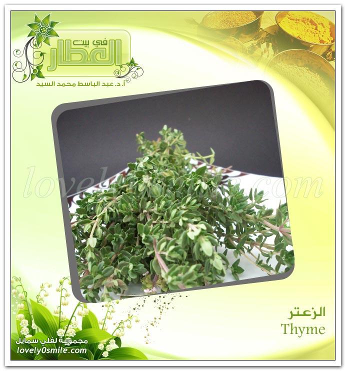 الزعتر أو الصعتر - Thyme