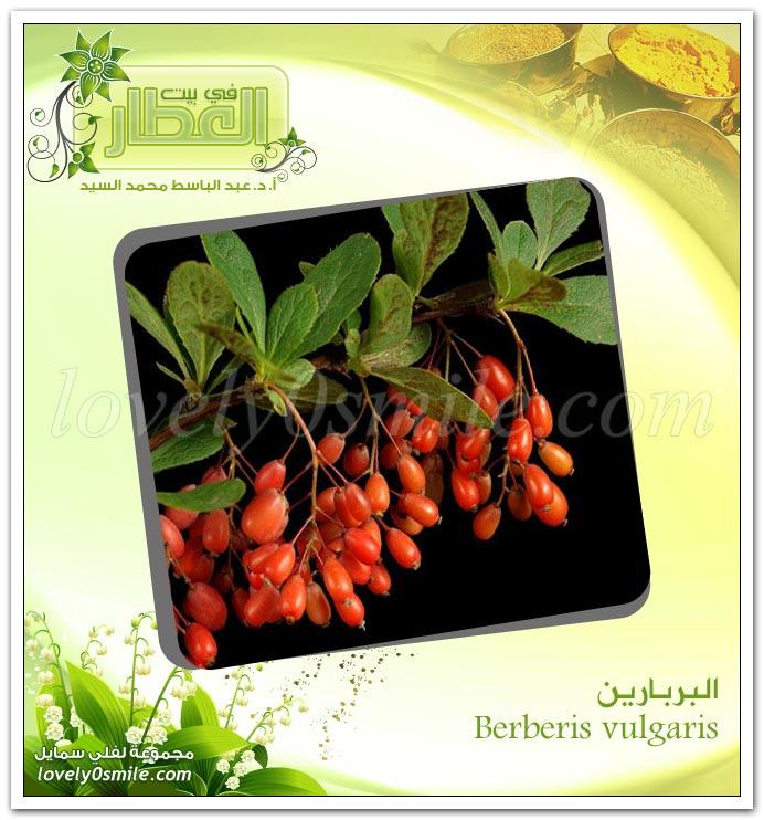 البربارين - Berberis vulgaris