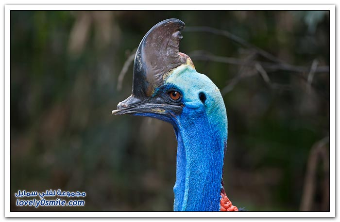 حديقة الطيور السنغافورية