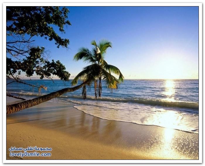 شواطئ رائعة