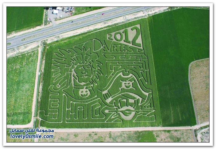 الرسومات على حقول الذرة