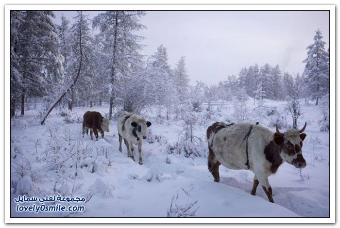 أبرد قرية العالم حرارتها درجة Coldest-village-in-the-world-23.jpg