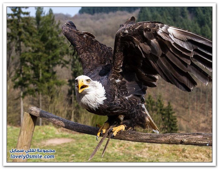 حديقة الطيور الجارحة في ألمانيا لفلي سمايل