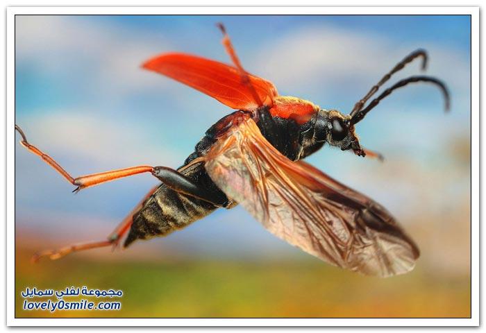 تصوير الحشرات بعدسة مكبرة
