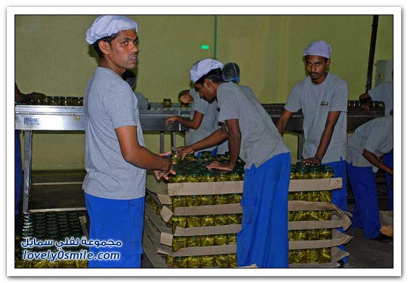 مصنع تعبئة الخيار المخلل في الهند