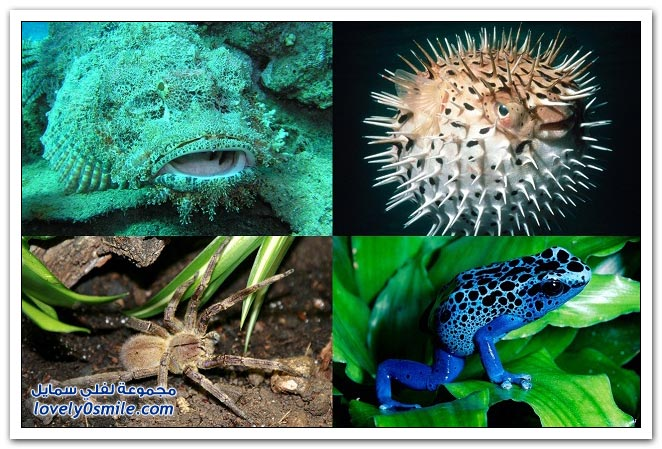 أكثر 10 حيوانات سامة على وجه الأرض