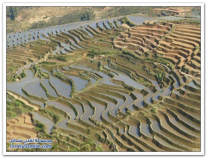 الحقول المدرجة في يوان يانغ