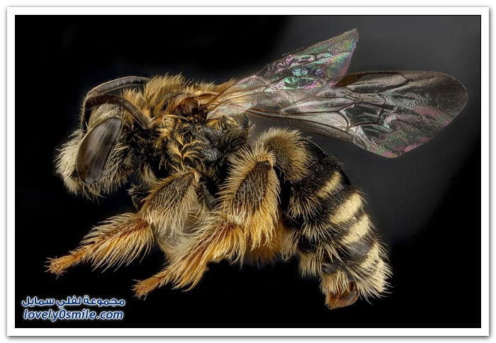 صور عالية الدقة لبعض الحشرات ج6