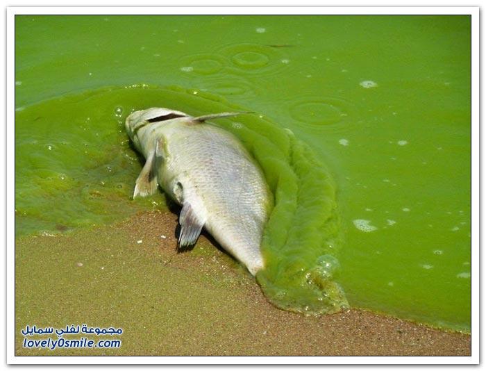 بحيرة إيرى من أجمل بحيرات العالم إلى مستنقع للطحالب السامة