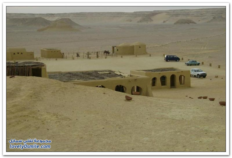 وادي الحيتان في مصر موقع الحيتان البرية
