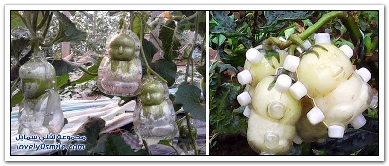 الفاكهة على شكل قوالب هو الهوس الجديد في الصين