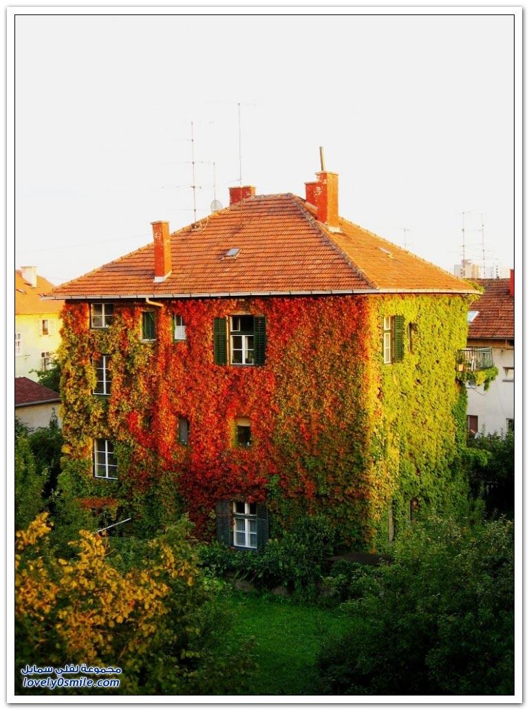 منازل مُزينة بالأشجار