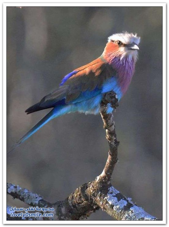 ألوان حيوانات كأنها ليست حقيقية .. ويخلق ما لا تعلمون