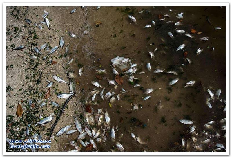 موت الأسماك في ريو دي جانيرو