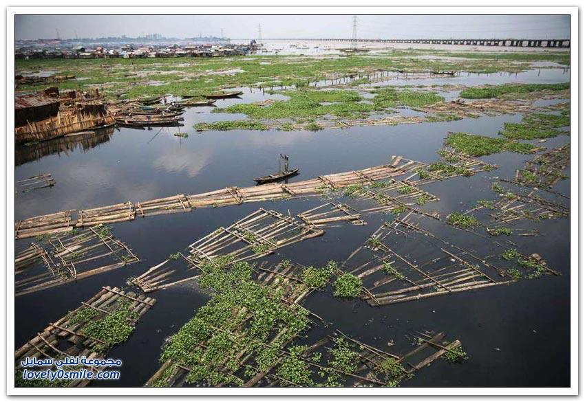 تجارة الأخشاب في نيجيريا