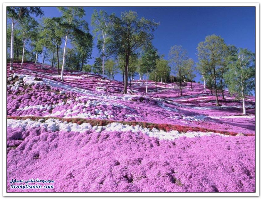 جمال ألوان الطبيعة حول العالم