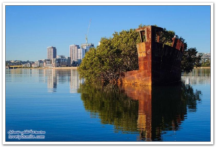 الغابة العائمة في مدينة سيدني بأستراليا