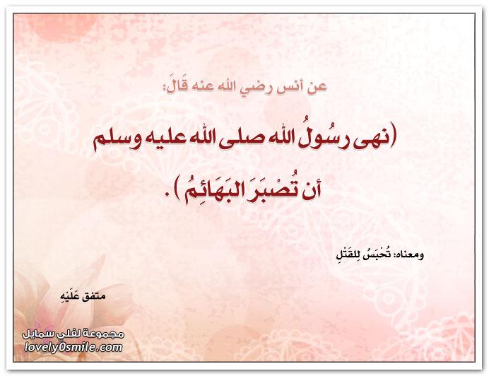 نهى رسول الله صلى الله عليه وسلم أن تُصبر البهائم
